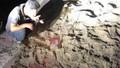 Bé trai 7 tuổi bị đàn chó gần 10 con cắn tử vong
