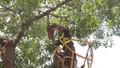Hà Nội tổng kiểm tra cây xanh trường học, bệnh viện... phòng mưa bão