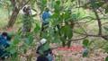 Tá hỏa phát hiện nam thanh niên chết trên ngọn cây