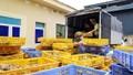 Quảng Ninh: Thu giữ hơn 22.000 gà con giống không rõ nguồn gốc