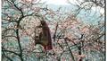 Bộ ảnh phim tuyệt đẹp về cao nguyên Hà Giang mùa xuân