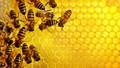 """Những nguyên nhân khiến loài ong có nguy cơ """"tuyệt chủng"""""""