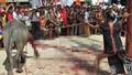 Bộ VH-TT&DL yêu cầu kiểm tra thông tin về vụ thu tiền tổ chức lễ hội đâm trâu