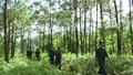 Tăng cường quản lý rừng đặc dụng, phòng hộ