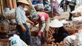 Lỗ hổng pháp lý với nông sản đội lốt hàng Việt