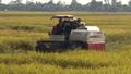 Cần Thơ: Yêu cầu ngân hàng hỗ trợ vốn cho việc thu mua lúa