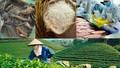 Xây dựng thương hiệu quốc gia cho nông sản Việt