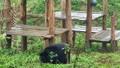 Khánh thành Cơ sở bảo tồn gấu Ninh Bình