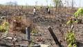 Đắk Lắk: Rừng liên tiếp bị tàn phá, cán bộ vẫn… vô can