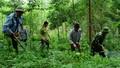 Đảm bảo sinh kế hài hòa với thiên nhiên - giải pháp hiệu quả bảo vệ rừng