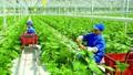 Tăng cường giải pháp đầu tư vào nông nghiệp
