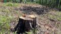 Lâm Đồng thu hồi 195 dự án liên quan đến rừng, đất rừng