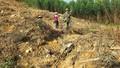 Báo động trong quản lý sử dụng đất tại các công ty nông, lâm nghiệp: 57 ngàn ha đất lấn chiếm, tranh chấp không kiểm soát được