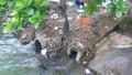 Số nước thải sinh hoạt phát sinh ra môi trường 7 triệu m3/ngày