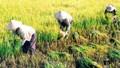 Thói quen ăn của người Việt thách thức an ninh lương thực