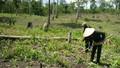 Thanh tra các dự án nguồn gốc từ nông, lâm trường