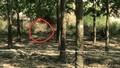 Thi thể nam giới cháy đen trong vườn cao su ở Bình Phước