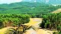 Việt Nam có 14,6 triệu ha rừng