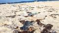 Nan giải rác thải xâm lấn điểm du lịch
