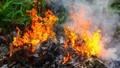 Người phụ nữ tử vong thương tâm khi đốt rác vườn nhà
