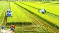 Người nông dân tương lai