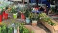 Hoa ly rớt giá thê thảm, cộng đồng mạng kêu gọi 'giải cứu'