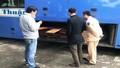 Bắt giữ xe khách chở gỗ sơn huyết đặc biệt quý hiếm