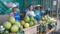 Lễ hội Thanh trà xứ Huế chính thức khai hội