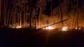 Đốt rẫy làm hơn 5 hecta rừng tràm bị thiêu rụi