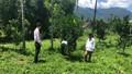Tín dụng chính sách giúp người dân vùng núi Thừa Thiên Huế phát triển các mô hình trồng trọt