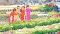 Nhà vườn miền Tây lo sức mua hoa tết Tân Sửu giảm so với những năm trước