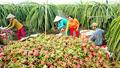 Tiền Giang đẩy mạnh chuỗi liên kết sản xuất – tiêu thụ ngành nông sản
