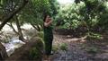 Hạn mặn ảnh hưởng lớn nhất tại ĐBSCL đúng dịp Tết Nguyên đán