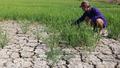 Xâm nhập mặn dự báo sẽ diễn ra khốc liệt tại ĐBSCL trong mùa khô 2021