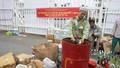 Đà Nẵng tiêu hủy hơn 5.000 sản phẩm hàng lậu, hàng giả