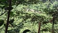 Cảnh báo voi hoang dã ra ngoài bìa rừng kiếm ăn ở Quảng Nam