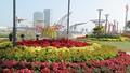 Đà Nẵng tưng bừng đón Tết Mậu Tuất với đường hoa xuân và 3 điểm bắn pháo hoa