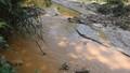 Xác minh vụ vỡ đập thải tại bãi vàng Quảng Nam