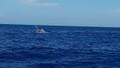 Cứu 6 thuyền viên tàu Quảng Bình nửa đêm bị chìm tại khu vực Hoàng Sa