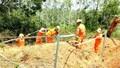Hoàn thành lắp đặt 10 bộ tiếp địa đường dây 110kV trước mùa mưa bão