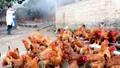 Công điện khẩn về tăng cường phòng chống dịch cúm gia cầm H5N6