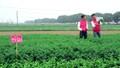 Cận cảnh quy trình sản xuất rau sạch Liên Thảo