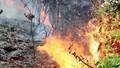 Hải Phòng: Cháy rừng dữ dội