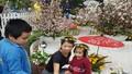 Hà Nội: Người dân thủ đô nô nức với lễ hội hoa anh đào 2017