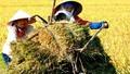 """Cải cách chính sách thị trường lúa gạo: Nông dân """"đứng"""" ở đâu?"""