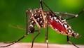 """Virus Zika -  """"Bóng ma"""" ngày một đáng sợ"""