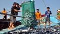 Tìm giải pháp hỗ trợ ngư dân Huế ổn định đời sống, sản xuất