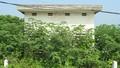 Hà Nam: Hàng loạt điếm canh đê thành nơi tiêm chích ma túy