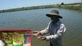 """Nuôi trồng thủy sản ở Huế thất bát vì sản phẩm xử lý môi trường bị """"rút ruột""""?"""