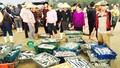 Sớm mai đi chợ cá  Hoàng Sa